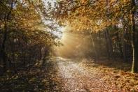 boswachterspad-heeze-leende-klooster-heidewandeling-bochtig-pad